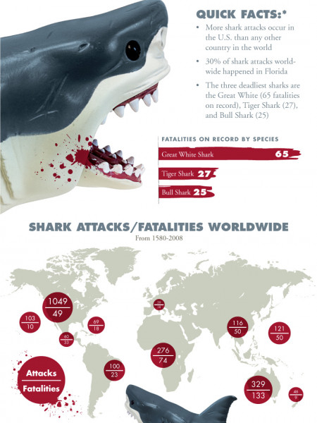 Shark Attacks Infographic