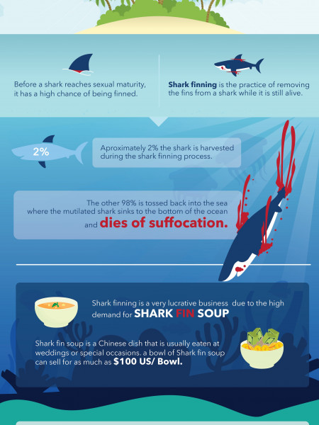 Shark Finning - The Facts Behind This Barbaric Practice Infographic