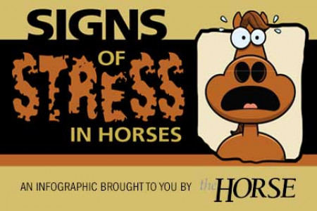 Signs of Stress in Horses Infographic