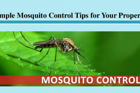 Simple Mosquito Control Tips for Your Property Infographic