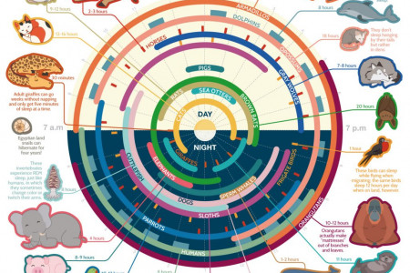 Sleep Habits of the Animal Kingdom Infographic