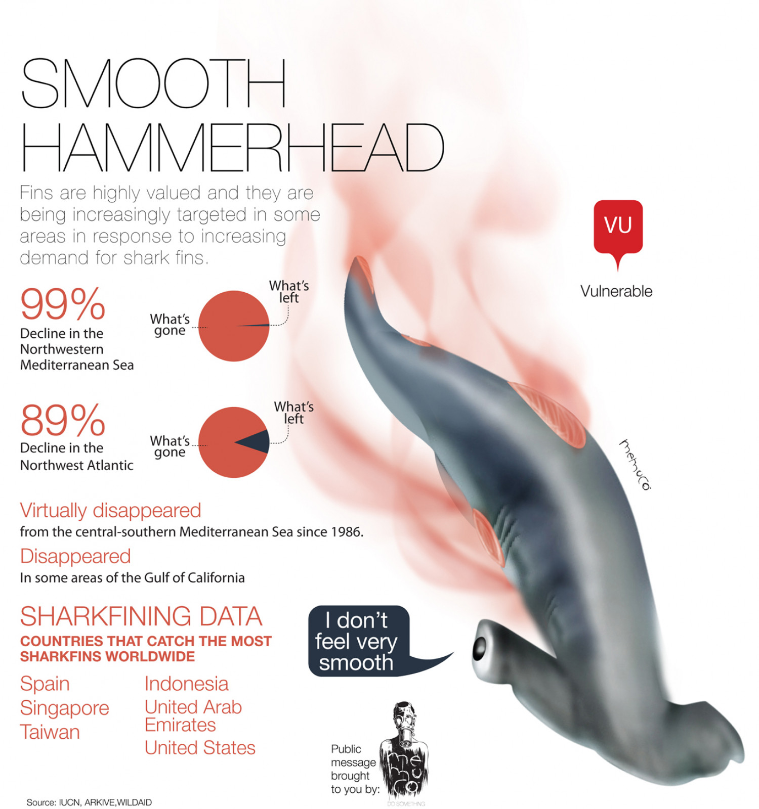 Smooth Hammerhead Infographic