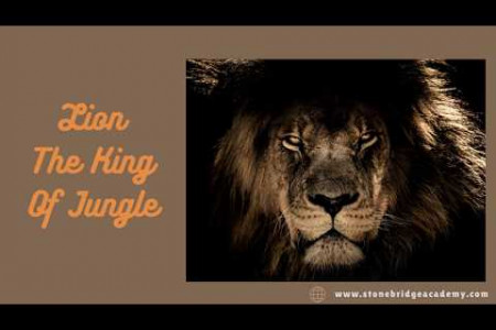 Some Interesting Things About Lion The King of Jungle Infographic