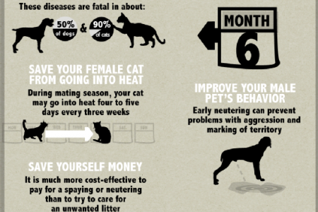 Spaying and Neutering: The Choice of the Responsible Pet Owner Infographic