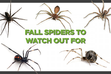Spiders In Iowa (Infographic) Infographic