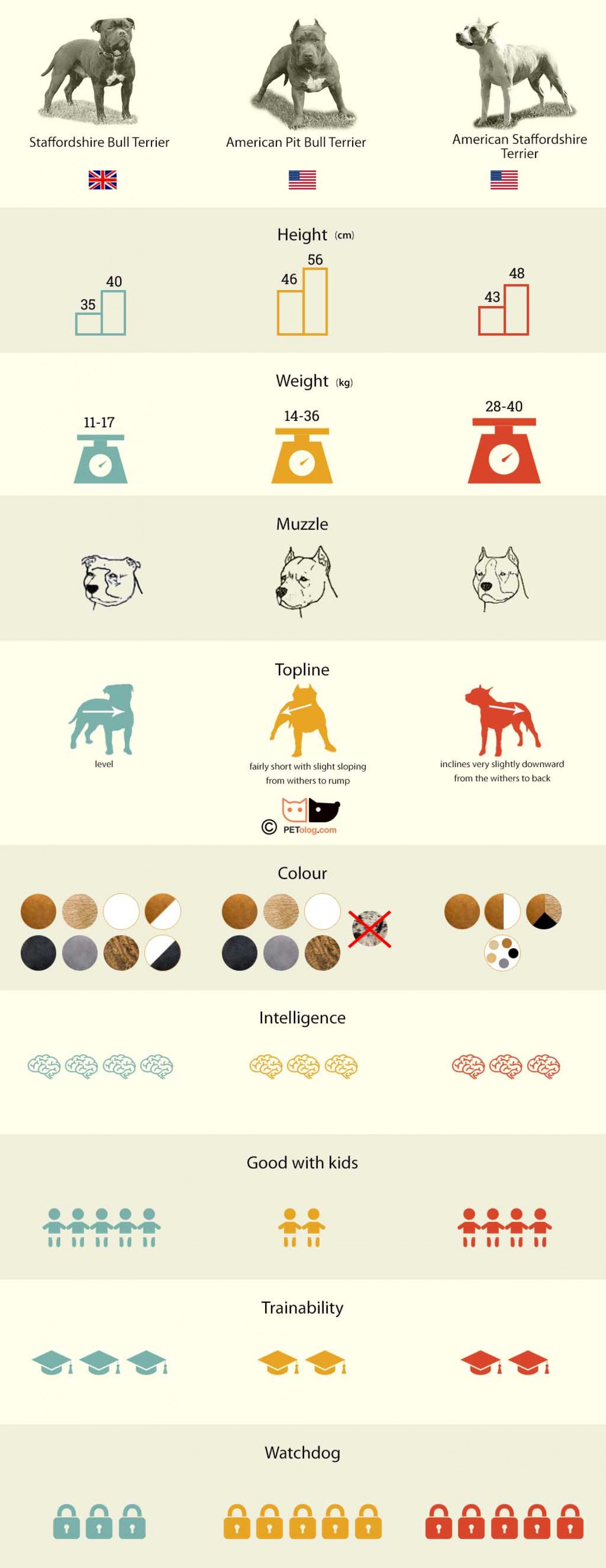 Staff or Pitbull - infographic Infographic