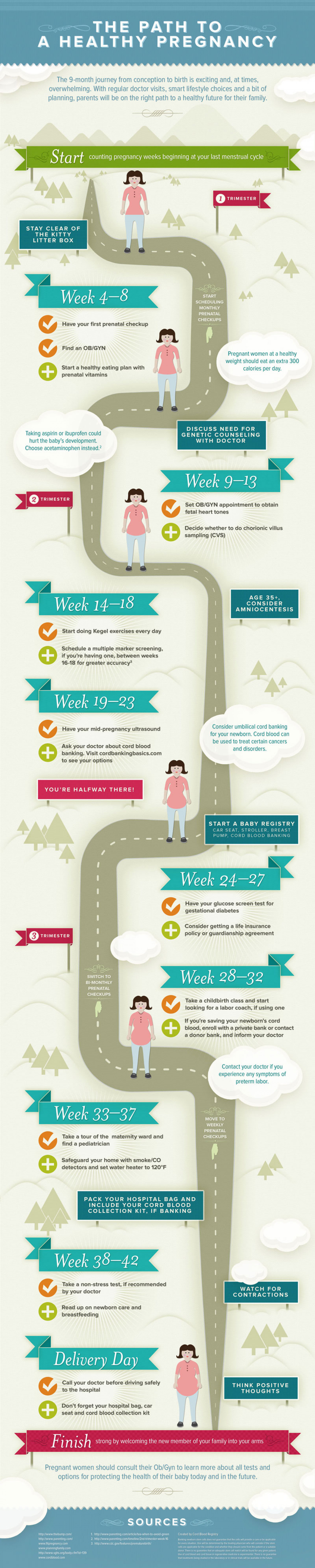 Stages of Pregnancy Infographic