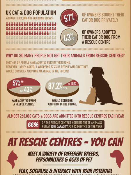 Starting a Life with Cats and Dogs Infographic