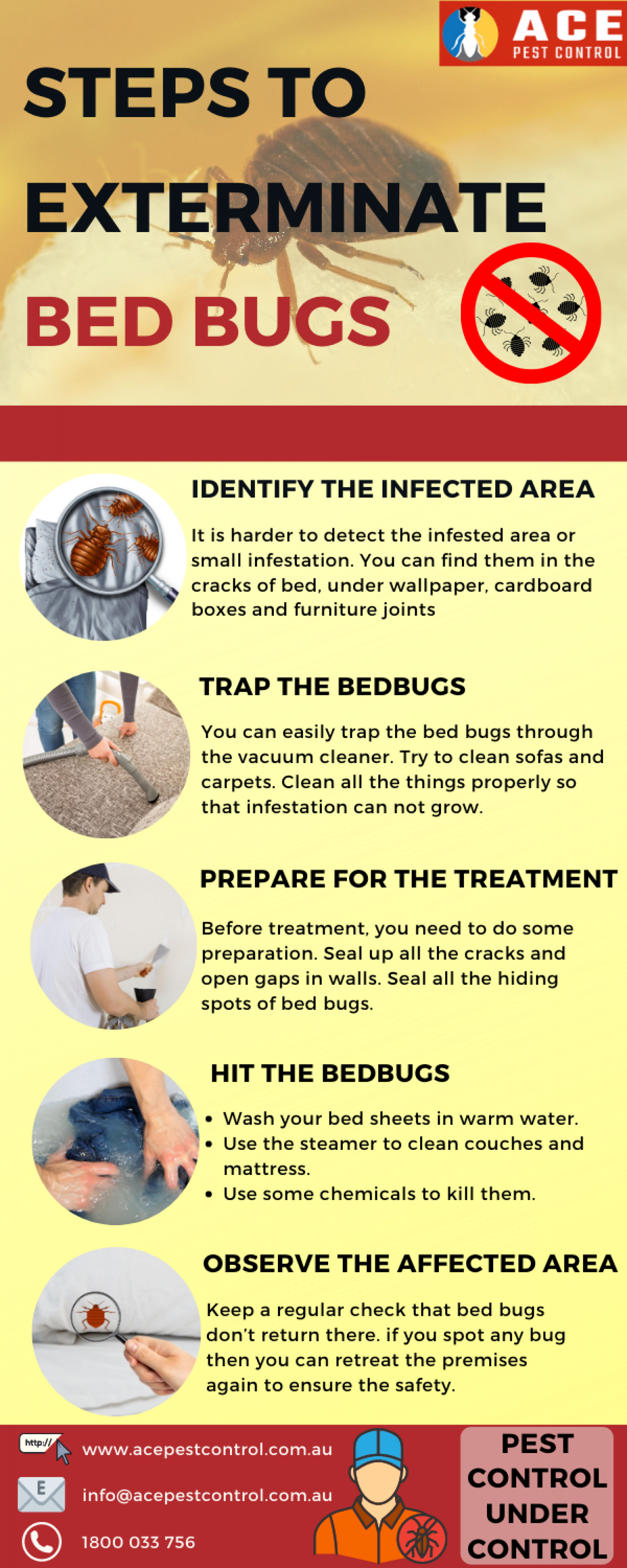 Steps To Exterminate Bed Bugs | Ace Pest Control Infographic