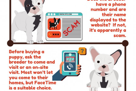 Steps to Follow while Purchasing a Puppy Online Infographic