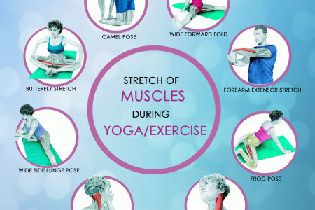 Stretch of Muscles in Yoga/Exercise Infographic