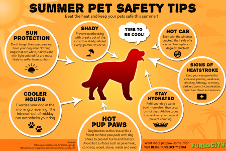 Summer Pet Safety Tips Infographic