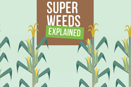 Super Weeds Explained Infographic