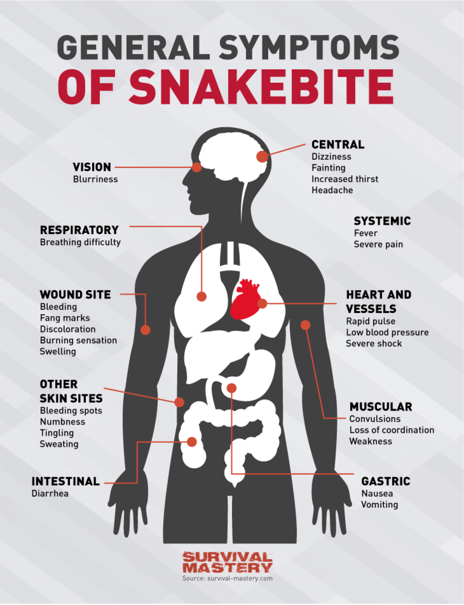 Symptoms Of Snakebite Infographic Visual