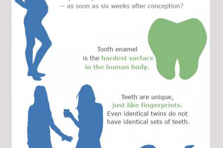 Teeth Facts Infographic