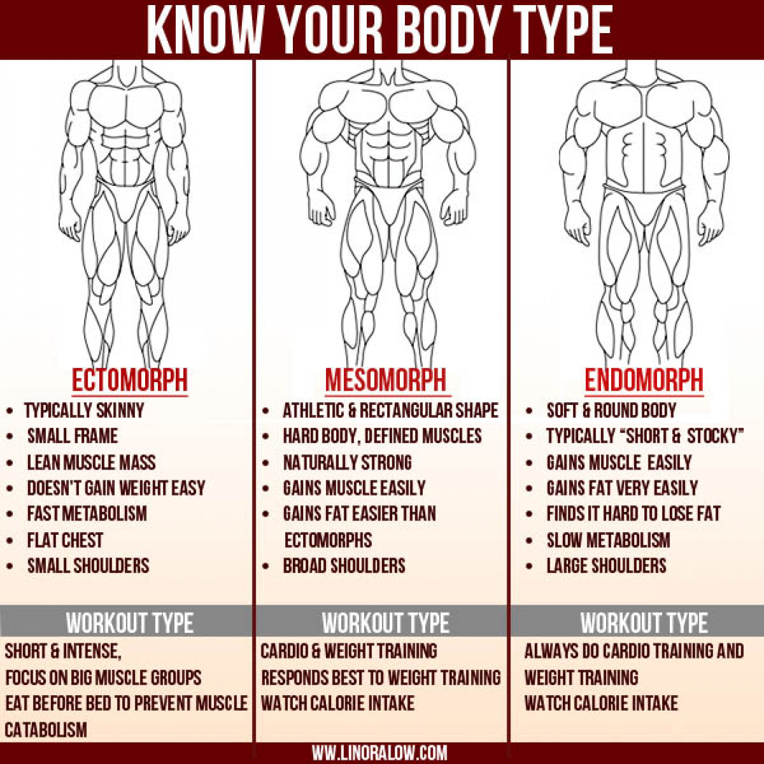Building Workout Routines For Endomorphs The 3 Body Types Infographic