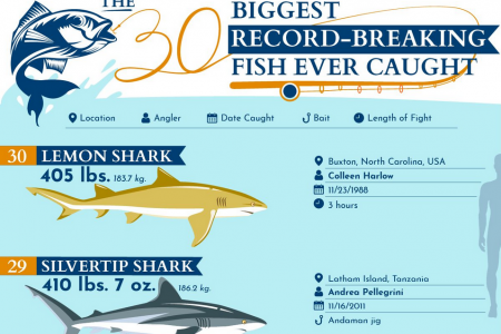The 30 Biggest Record-Breaking Fish Ever Caught Infographic