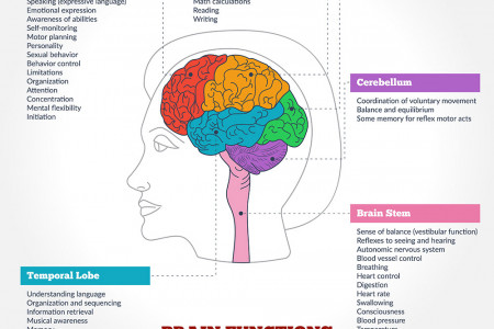 The Anatomy of a Brain Injury Infographic