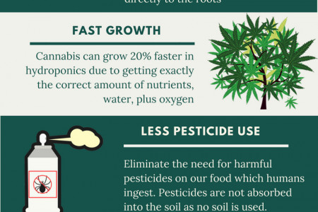 The Benefits of Hydroponics Growing Infographic