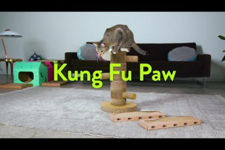 The Best Cat Scratch post! Kung-fu Paw! Infographic
