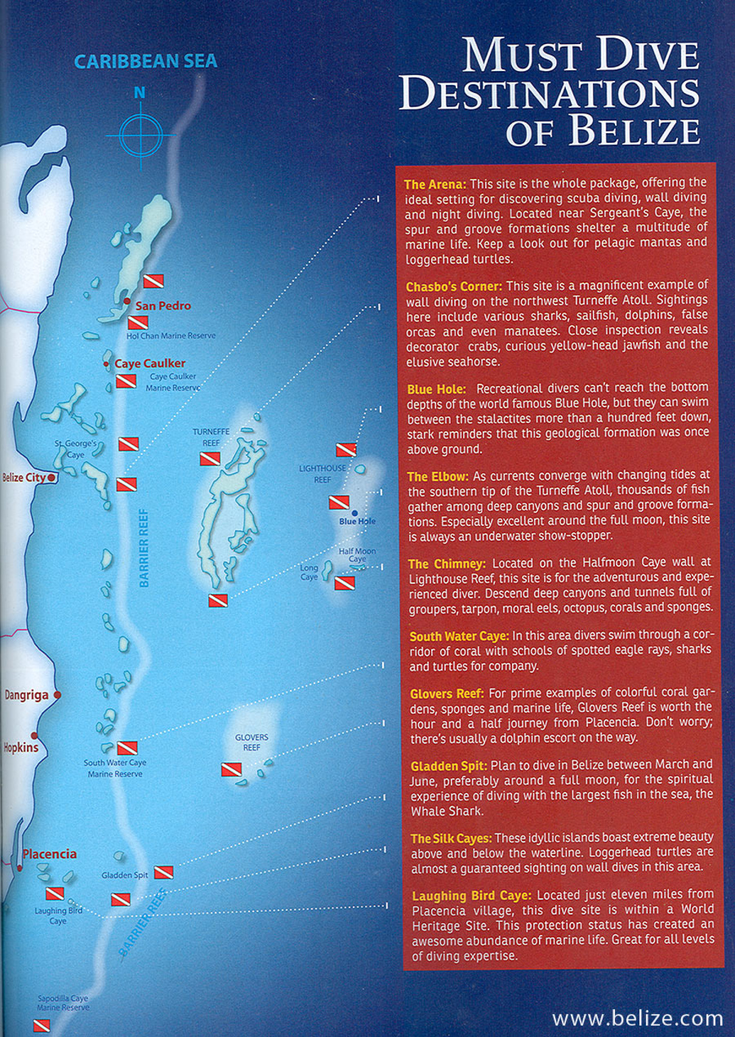 The Best Dive Spots In Belize Infographic