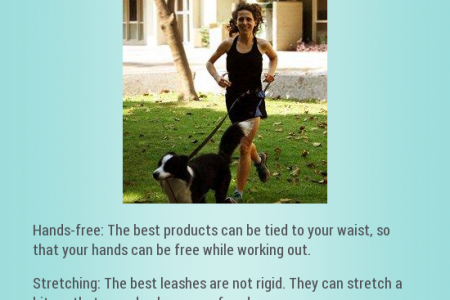 The Best Dog Leashes for Running Infographic