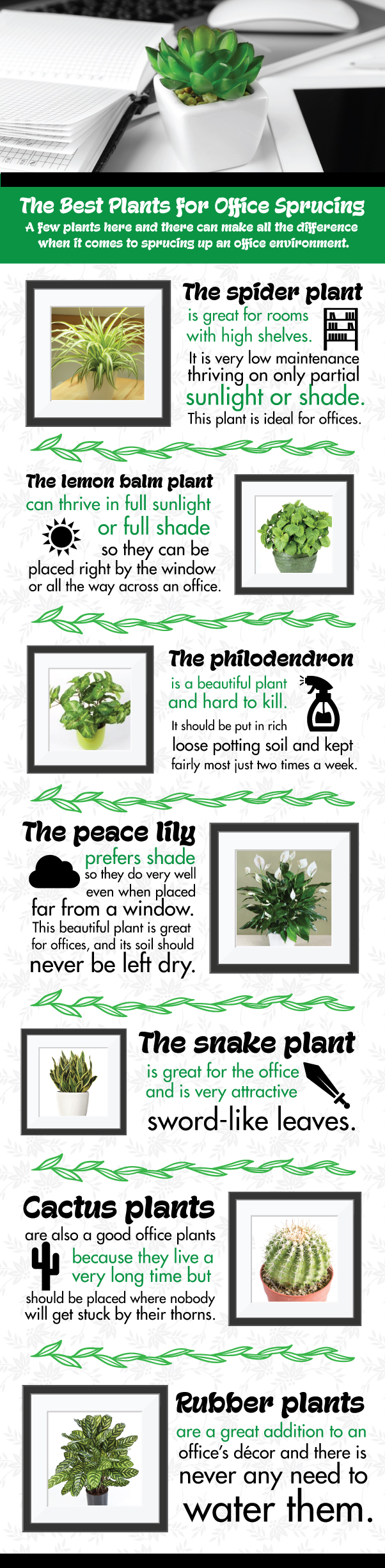 100 good plants for office these plants bring luck wealth p