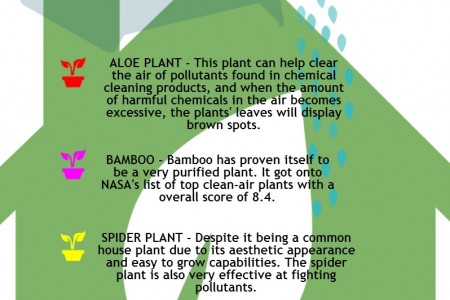 The Best Plants For Your House Infographic