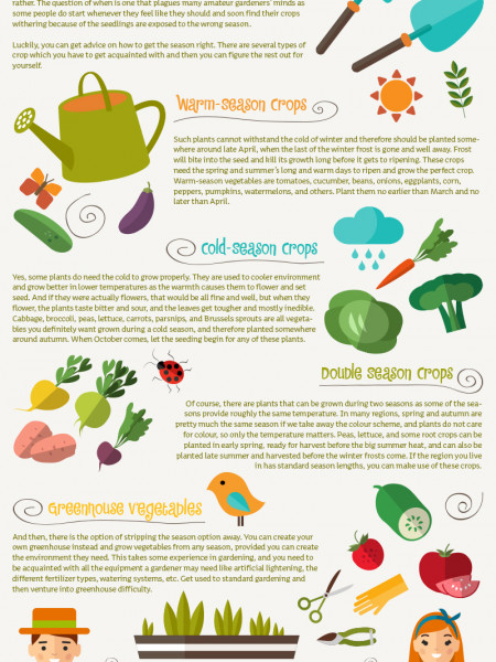 The Best Time to Plant Different Vegetables Infographic