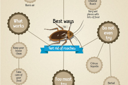 cockroaches Infographics | Visual.ly