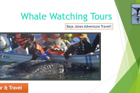 The Best Whale Watching Camp Safari in Baja Infographic