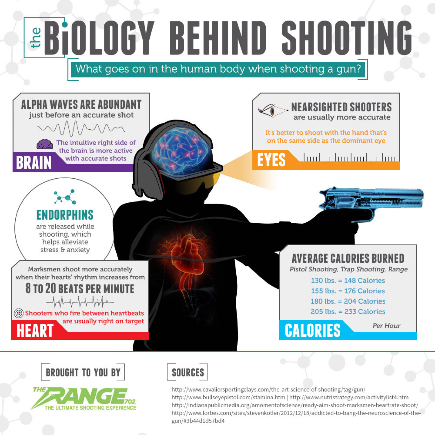 The Biology of Shooting a Gun Infographic