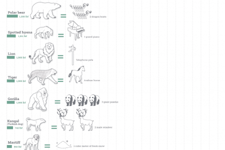 The Bite Force of Different Animals Infographic