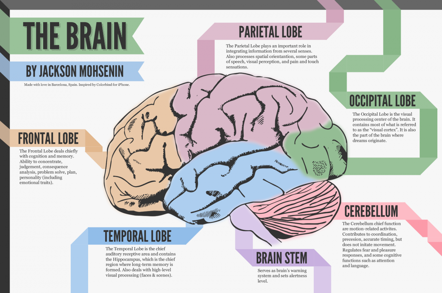 a look at the brain | visual.ly, Human Body