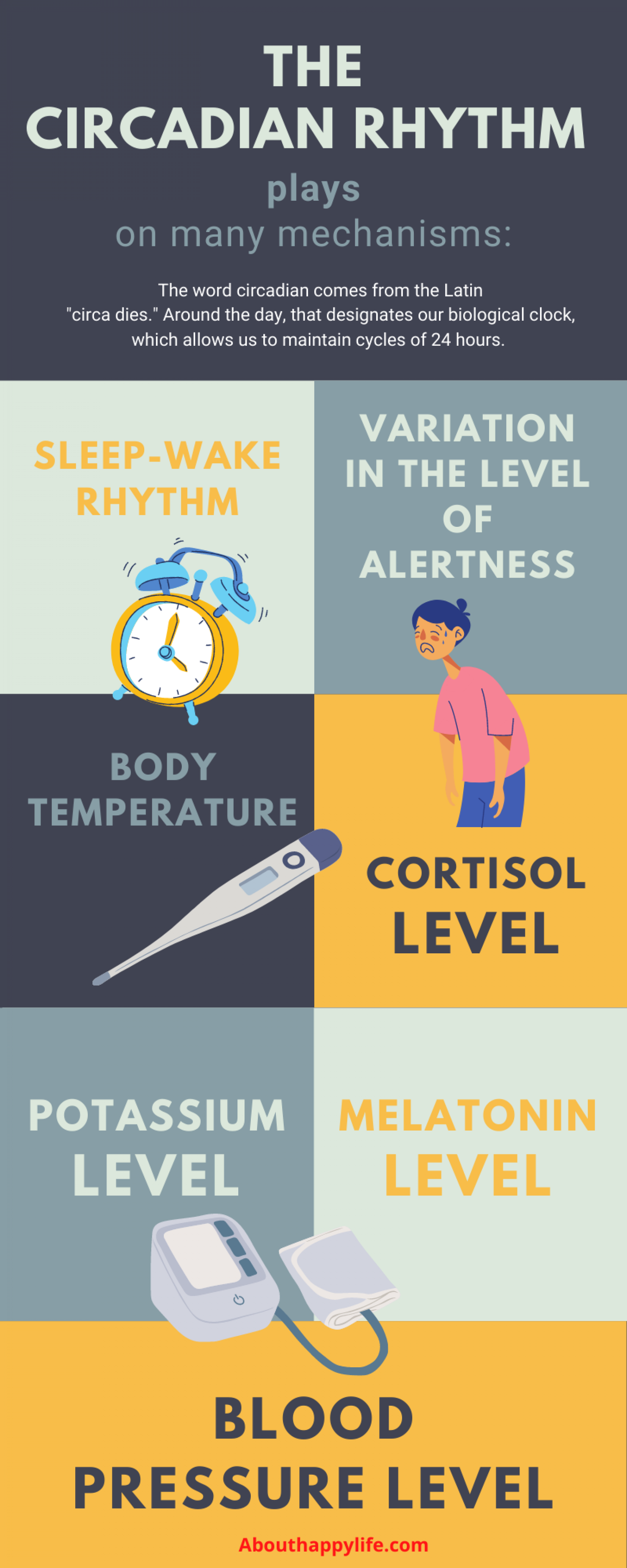 The Circadian Rhythm Infographic