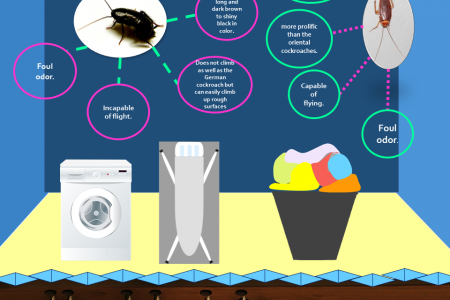 The Cockroach Zone Infographic