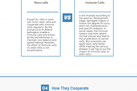The Complete Guide to Know How Stem Cells Cooperate with Immune Cells to Unleash Great Potential of Treatment Infographic
