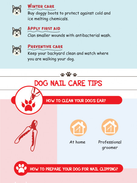 The Dog Grooming Ultimate Guide Infographic