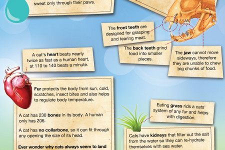 The Domesticated Hunter - The Anatomy Of The House Cat Infographic