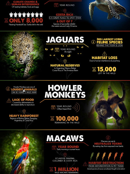 The Endangered Species in Latin America Infographic