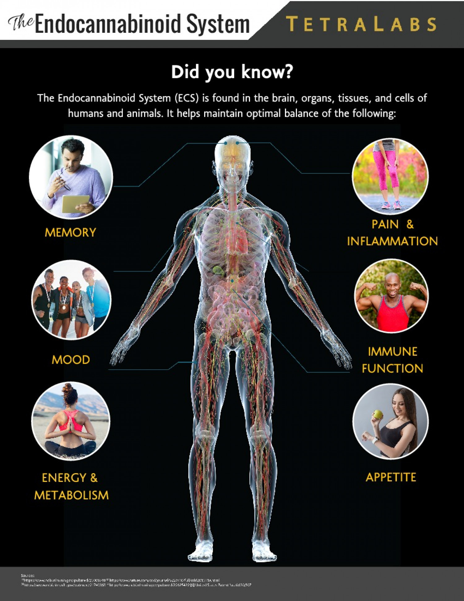 The Endocannabinod System Infographic