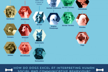 The Evolution Of The Dog Infographic