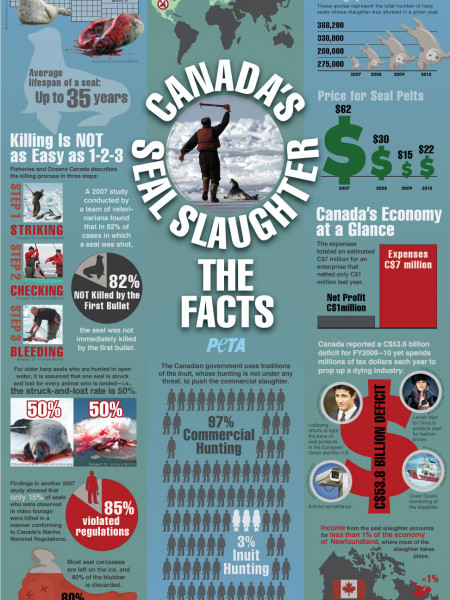 The Facts About Canada's Seal Slaughter Infographic