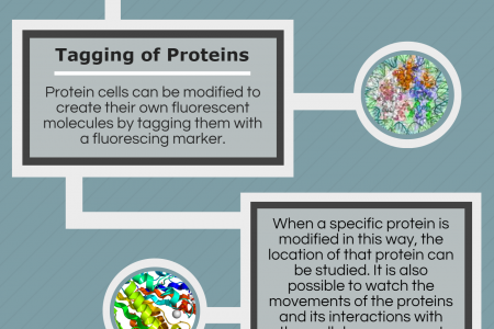 The Fluorescence Microscope Infographic