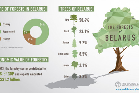 The Forests of Belarus Infographic