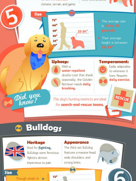 The Great Dog Breed Checklist Infographic