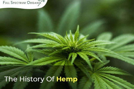 The history of hemp Infographic