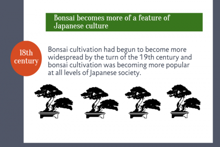 The History of the Bonsai Tree Infographic