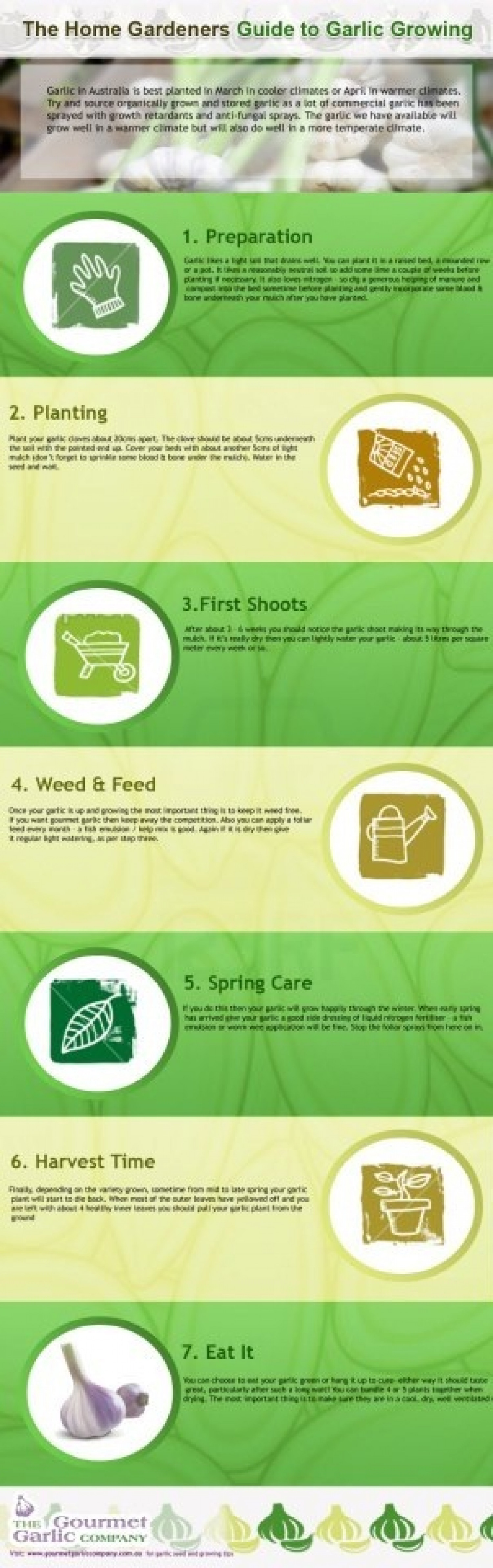 The Home Gardeners Guide to Garlic Growing Infographic