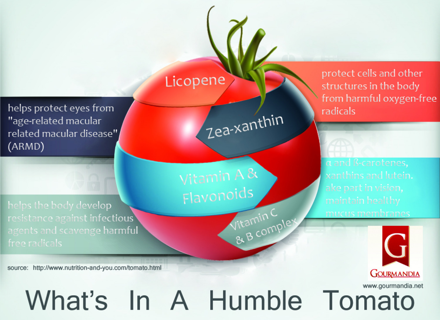 The Humble Tomato Plant Diagram Infographic